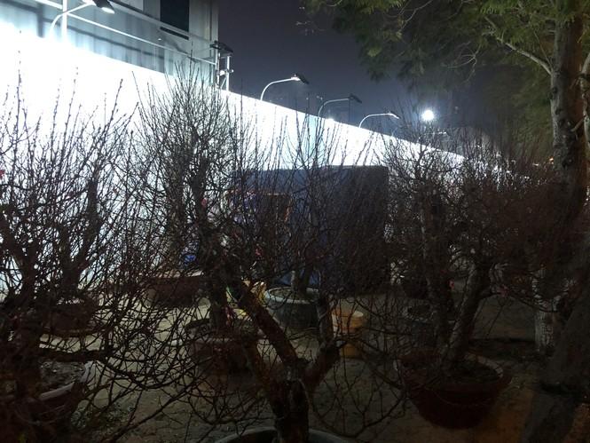 Dân buôn thức trắng đêm 'canh' đào, bưởi  trên vỉa hè Hà Nội - ảnh 14