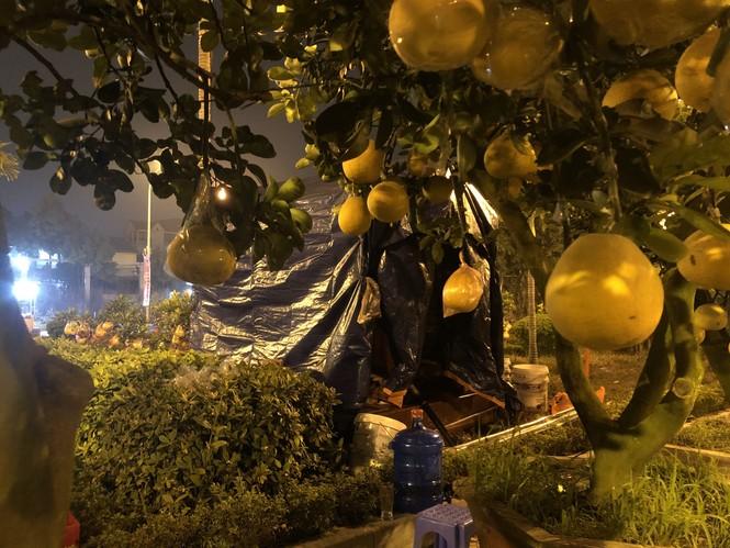 Dân buôn thức trắng đêm 'canh' đào, bưởi  trên vỉa hè Hà Nội - ảnh 7