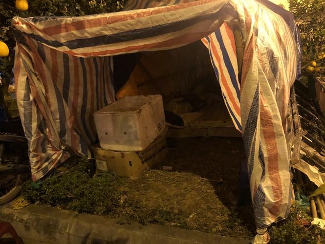 Dân buôn thức trắng đêm 'canh' đào, bưởi  trên vỉa hè Hà Nội - ảnh 10