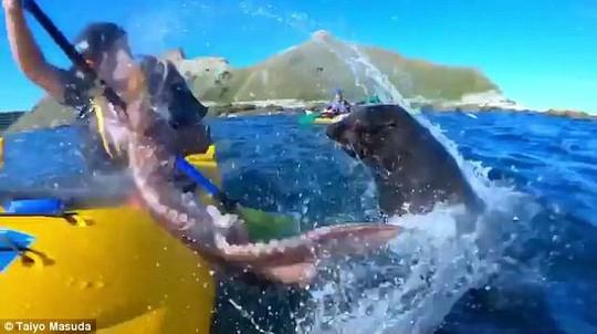 Hải cẩu tát bạch tuộc vào mặt người trên thuyền - ảnh 3