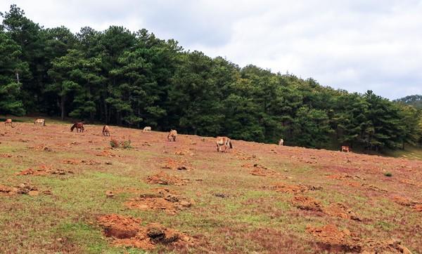Đồi cỏ hồng tuyệt đẹp bị xâm hại ngay trong Mùa hội  - ảnh 2