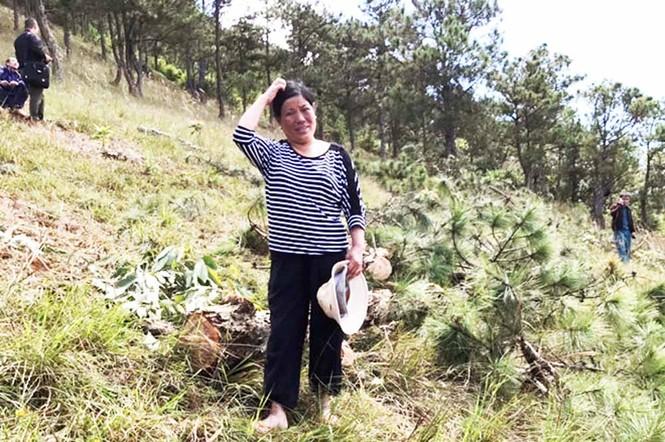 Phạt nặng 3 đối tượng triệt hạ thông Đà Lạt, buộc trồng lại rừng  - ảnh 1