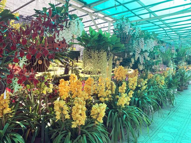 1.500 chậu lan đua hương sắc tại hội thi Sắc màu hoa Lan Việt Nam - ảnh 1