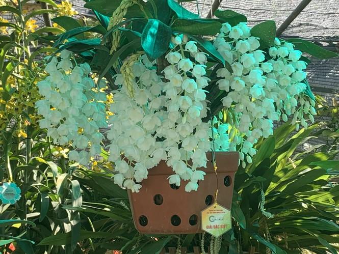 1.500 chậu lan đua hương sắc tại hội thi Sắc màu hoa Lan Việt Nam - ảnh 2