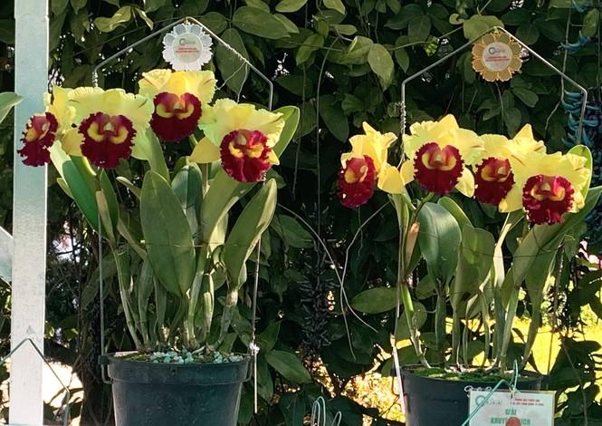 1.500 chậu lan đua hương sắc tại hội thi Sắc màu hoa Lan Việt Nam - ảnh 3