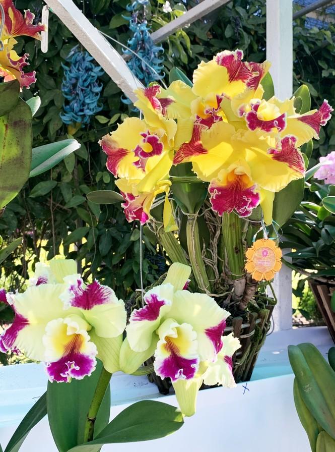 Muôn hoa khoe sắc rực rỡ tại Hội hoa xuân Đà Lạt - ảnh 2