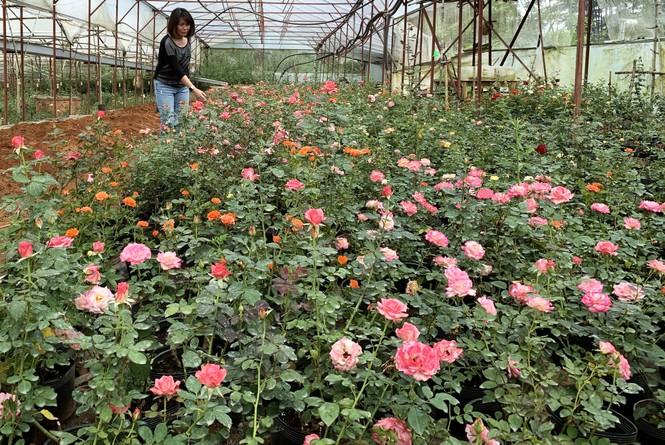 Muôn hoa khoe sắc rực rỡ tại Hội hoa xuân Đà Lạt - ảnh 6