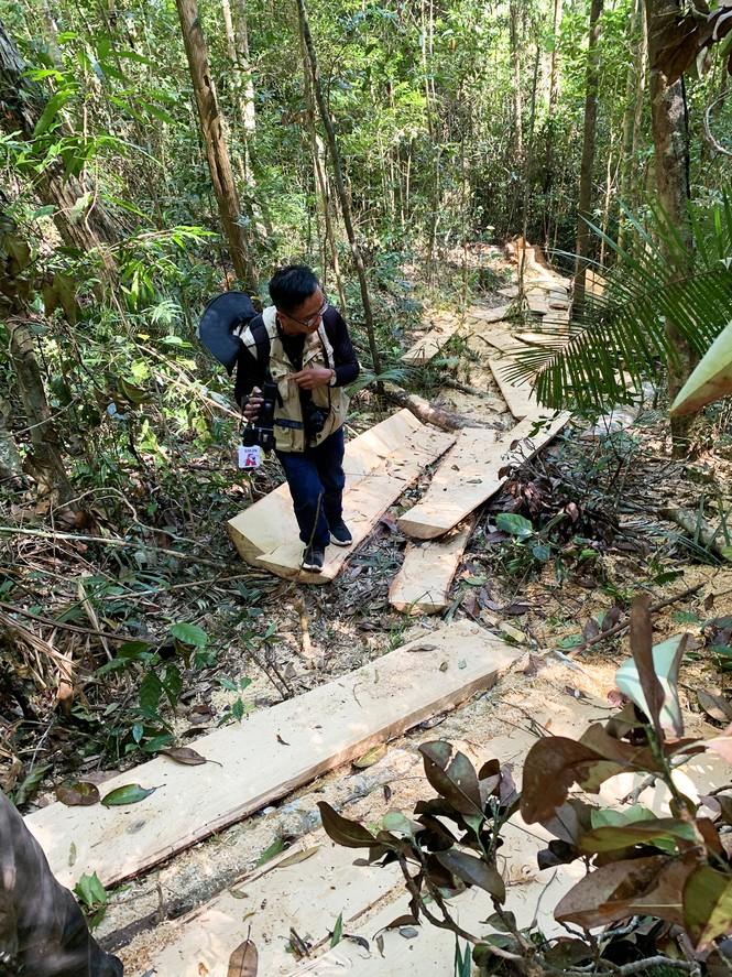 Hỏa tốc chỉ đạo điều tra vụ tàn phá rừng nguyên sinh - ảnh 1
