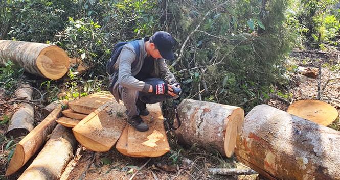 Hỏa tốc chỉ đạo điều tra vụ tàn phá rừng nguyên sinh - ảnh 2