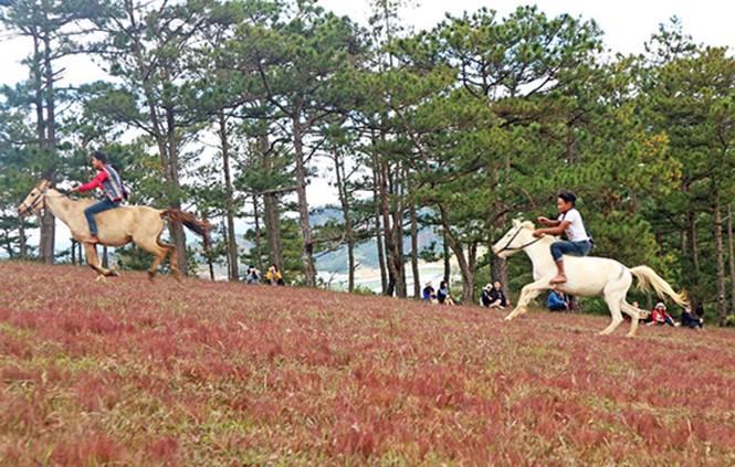 Đồi cỏ hồng Lâm Đồng khiến du khách mê mẩn - ảnh 1