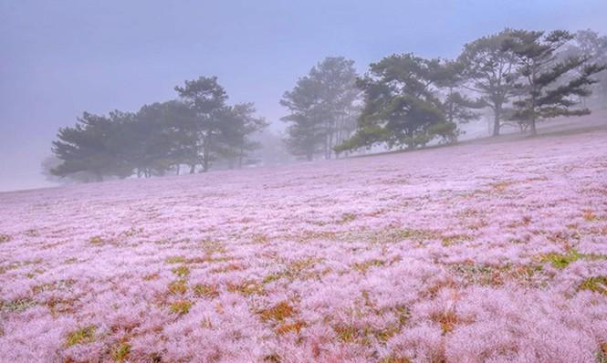 Đồi cỏ hồng Lâm Đồng khiến du khách mê mẩn - ảnh 7
