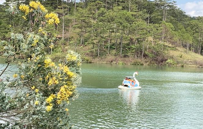 Tết Dương lịch đến Đà Lạt săn mây, ngắm hoa - ảnh 2