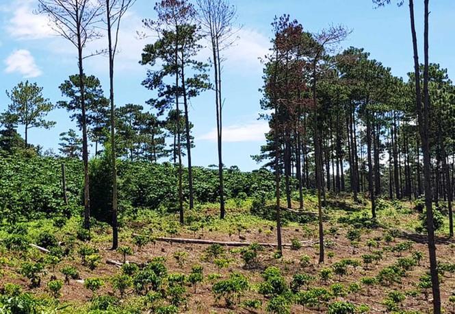 Nhiều dự án để mất rừng, chây ỳ bồi thường hàng trăm tỷ đồng  - ảnh 1