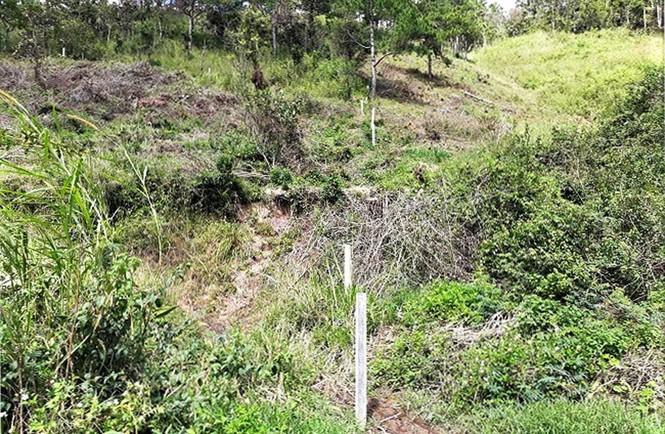Lâm Đồng: Chấm dứt dự án sân golf theo kết luận của Thanh tra Chính phủ - ảnh 3