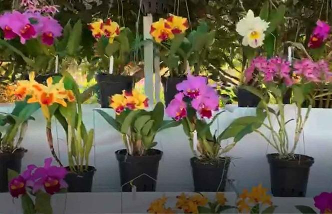 Đà Lạt: Lần đầu tiên Hội hoa xuân mở cửa ban đêm - ảnh 1