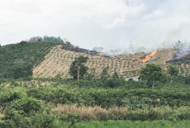 Nguy cơ cháy rừng cấp cực kỳ nguy hiểm ở Lâm Đồng  - ảnh 2