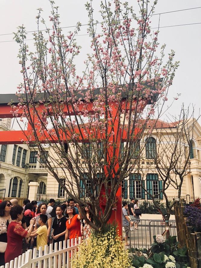 Những hình ảnh đẹp tại lễ hội hoa anh đào - ảnh 10