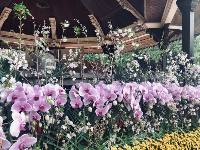 Những hình ảnh đẹp tại lễ hội hoa anh đào - ảnh 9