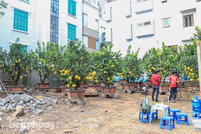 Chưa đến Tết, đào thế và bưởi cảnh giá 'khủng' đã bày khắp phố Hà Nội  - ảnh 10