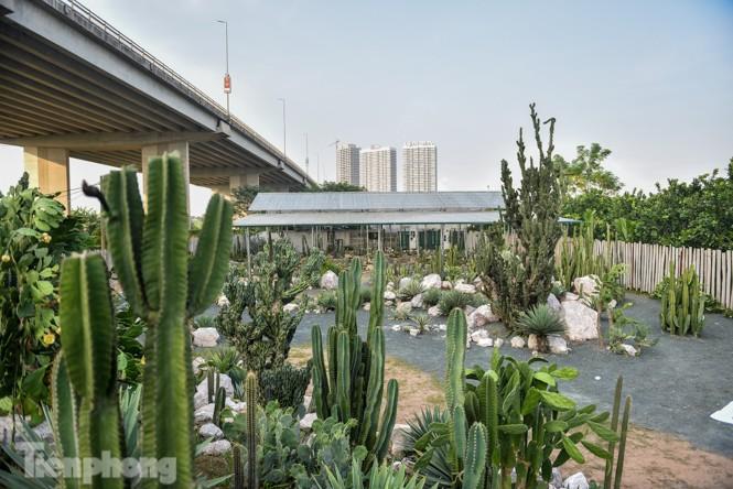 Vườn xương rồng độc đáo giữa Hà Nội - ảnh 13