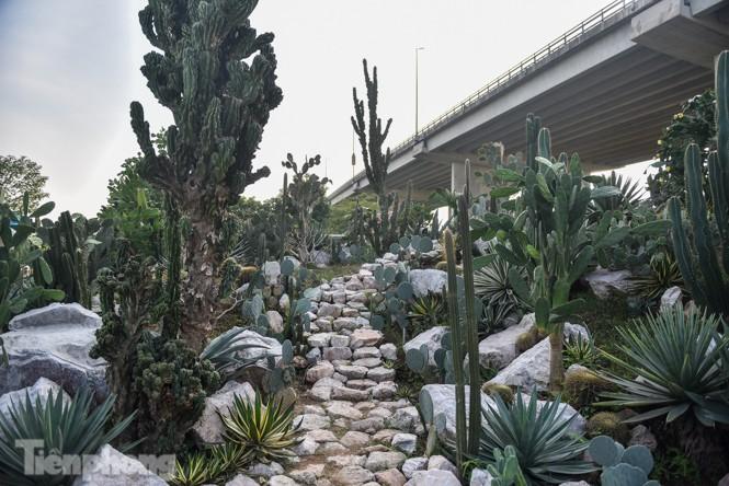 Vườn xương rồng độc đáo giữa Hà Nội - ảnh 1