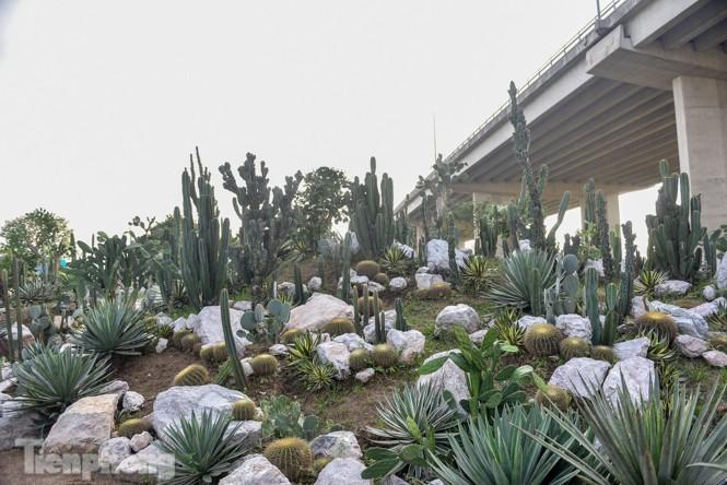 Vườn xương rồng độc đáo giữa Hà Nội - ảnh 2