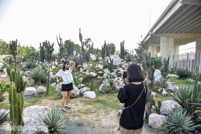 Vườn xương rồng độc đáo giữa Hà Nội - ảnh 4