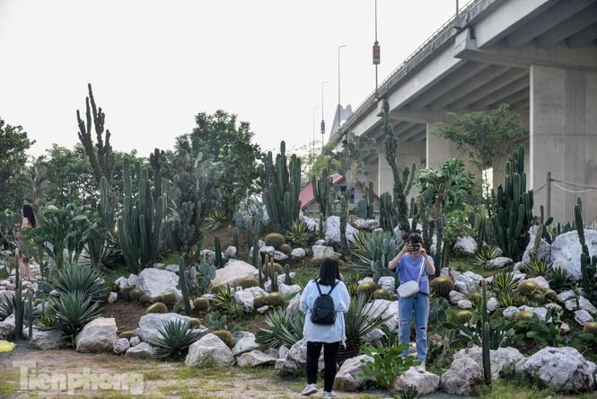 Vườn xương rồng độc đáo giữa Hà Nội - ảnh 7