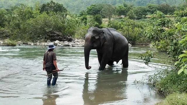 Con voi cuối cùng ở Bắc Tây Nguyên đã chết - ảnh 2