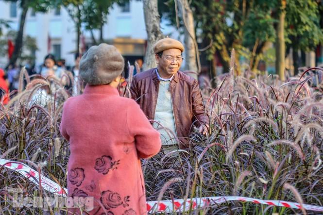Ngất lịm trước cỏ lau màu tím bên bờ hồ Hoàn Kiếm - ảnh 9
