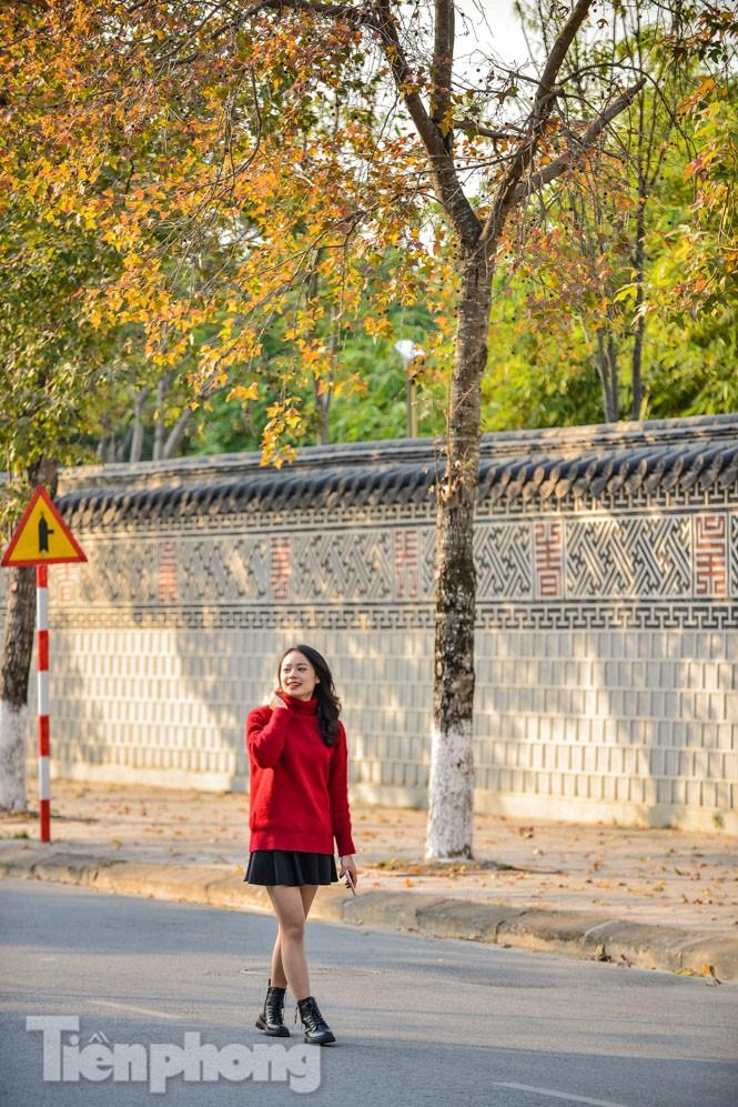 Thiếu nữ Hà thành khoe sắc bên hàng phong lá đỏ đẹp như xứ Hàn - ảnh 7