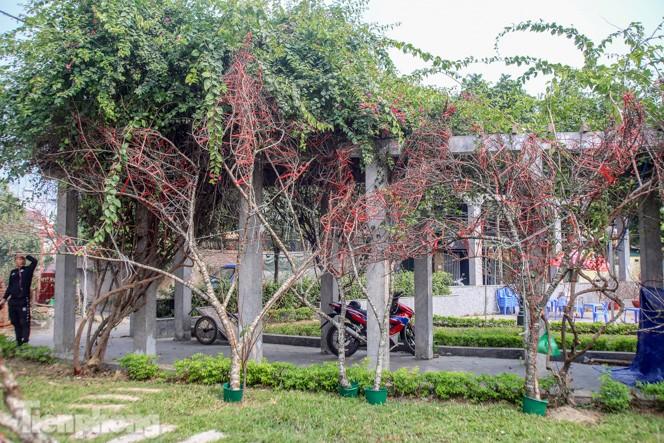 Tận thấy những cành đào dán tem đầu tiên xuất hiện tại Hà Nội - ảnh 6