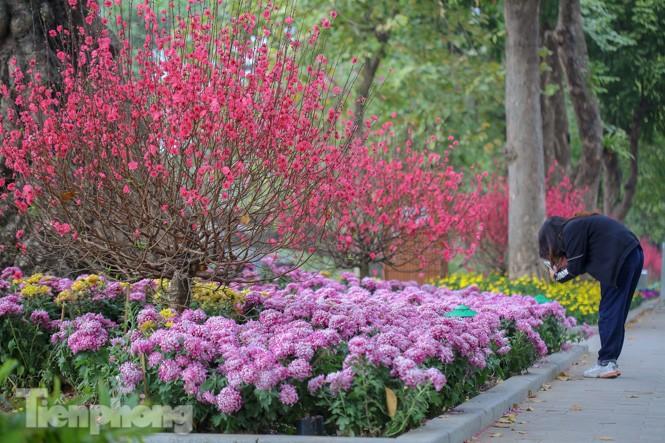 Đào bung sắc bên những thảm hoa rực rỡ quanh hồ Hoàn Kiếm ngày cận Tết - ảnh 11