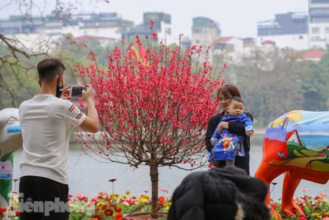 Đào bung sắc bên những thảm hoa rực rỡ quanh hồ Hoàn Kiếm ngày cận Tết - ảnh 13