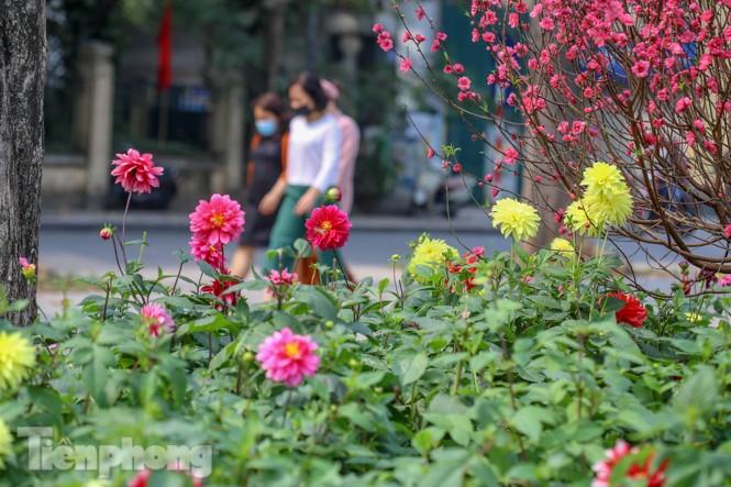Đào bung sắc bên những thảm hoa rực rỡ quanh hồ Hoàn Kiếm ngày cận Tết - ảnh 14