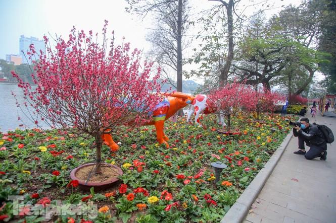 Đào bung sắc bên những thảm hoa rực rỡ quanh hồ Hoàn Kiếm ngày cận Tết - ảnh 2
