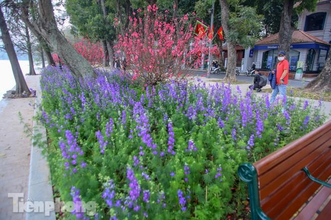 Đào bung sắc bên những thảm hoa rực rỡ quanh hồ Hoàn Kiếm ngày cận Tết - ảnh 3