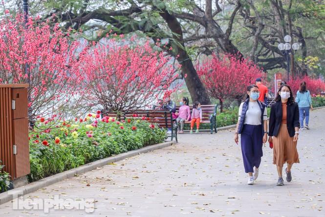 Đào bung sắc bên những thảm hoa rực rỡ quanh hồ Hoàn Kiếm ngày cận Tết - ảnh 5