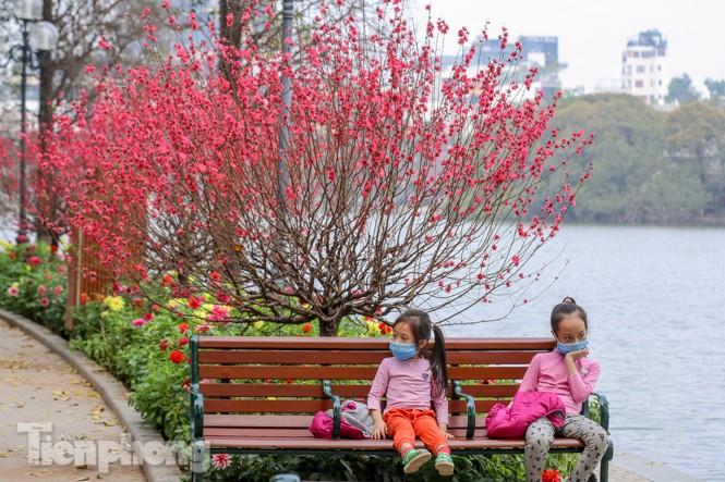 Đào bung sắc bên những thảm hoa rực rỡ quanh hồ Hoàn Kiếm ngày cận Tết - ảnh 7