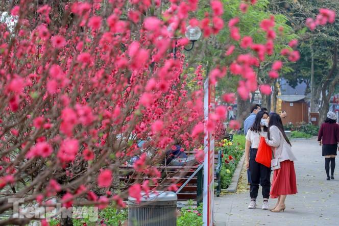 Đào bung sắc bên những thảm hoa rực rỡ quanh hồ Hoàn Kiếm ngày cận Tết - ảnh 8