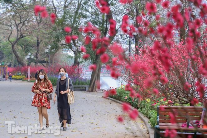 Đào bung sắc bên những thảm hoa rực rỡ quanh hồ Hoàn Kiếm ngày cận Tết - ảnh 9