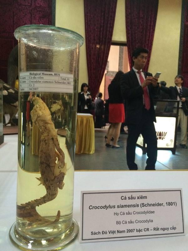 Cận cảnh tiêu bản cá bống trắng của Nhà vua Akihito tặng Việt Nam - ảnh 12
