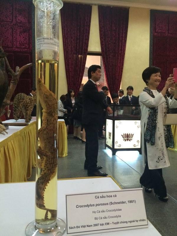 Cận cảnh tiêu bản cá bống trắng của Nhà vua Akihito tặng Việt Nam - ảnh 13