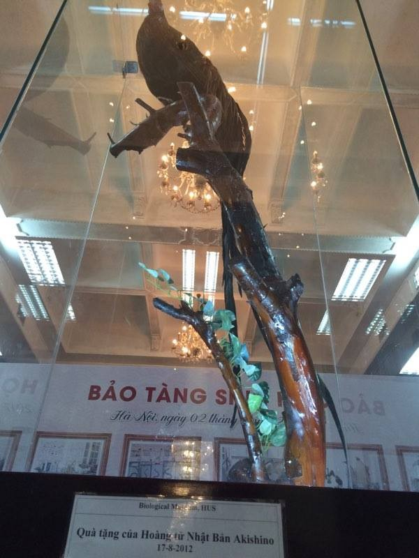 Cận cảnh tiêu bản cá bống trắng của Nhà vua Akihito tặng Việt Nam - ảnh 6