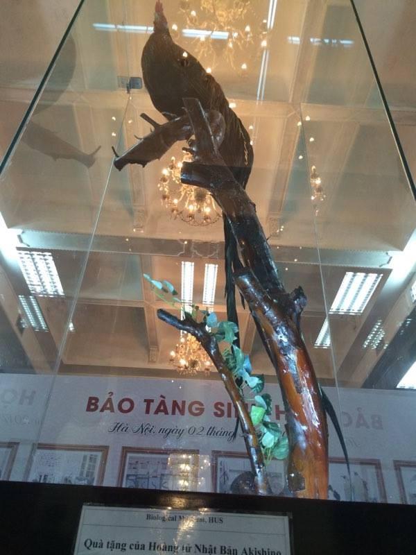 Cận cảnh tiêu bản cá bống trắng của Nhà vua Akihito tặng Việt Nam - ảnh 7