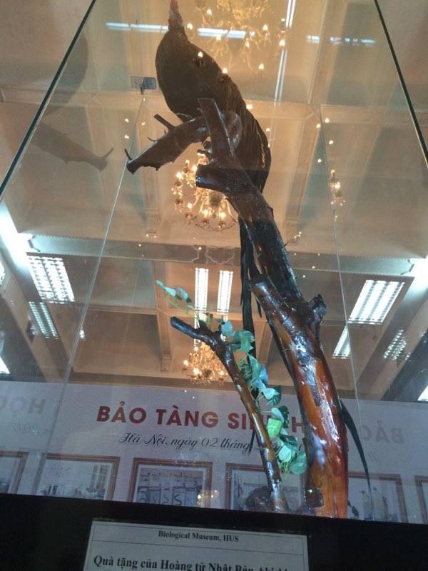 Cận cảnh tiêu bản cá bống trắng của Nhà vua Akihito tặng Việt Nam - ảnh 8