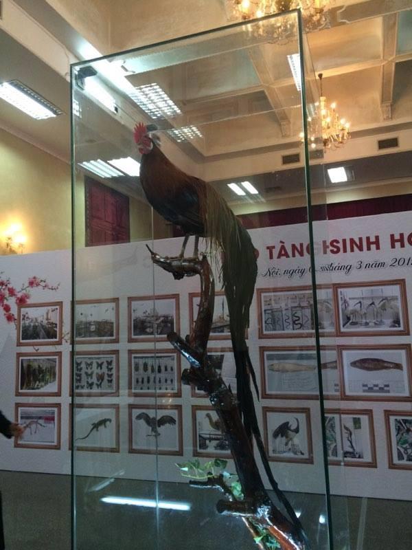 Cận cảnh tiêu bản cá bống trắng của Nhà vua Akihito tặng Việt Nam - ảnh 9
