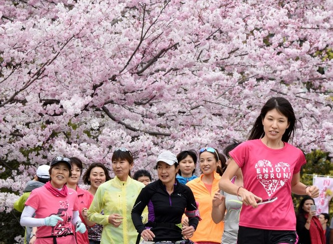 Ngắm vẻ đẹp rực rỡ của hoa anh đào Nhật Bản - ảnh 8