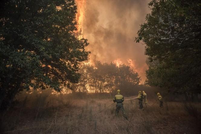 Hình ảnh cháy rừng khủng khiếp ở Tây Ban Nha - ảnh 4
