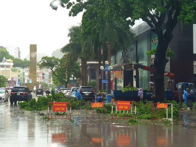 Hải Phòng ngổn ngang cây đổ sau bão số 2 - ảnh 12